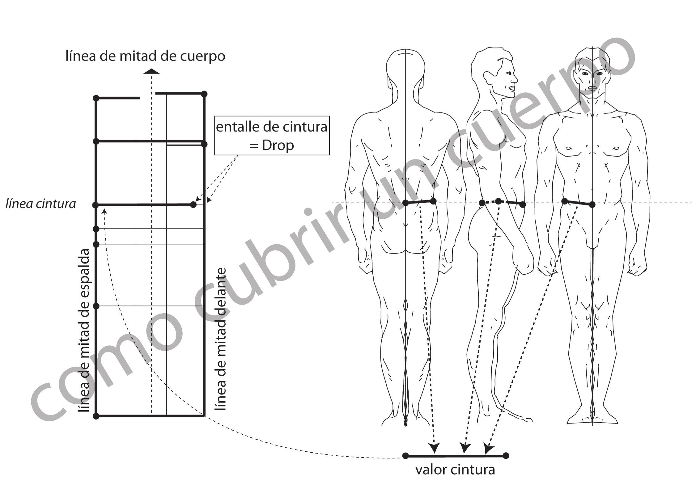 El contorno de cintura | Cómo cubrir un cuerpo